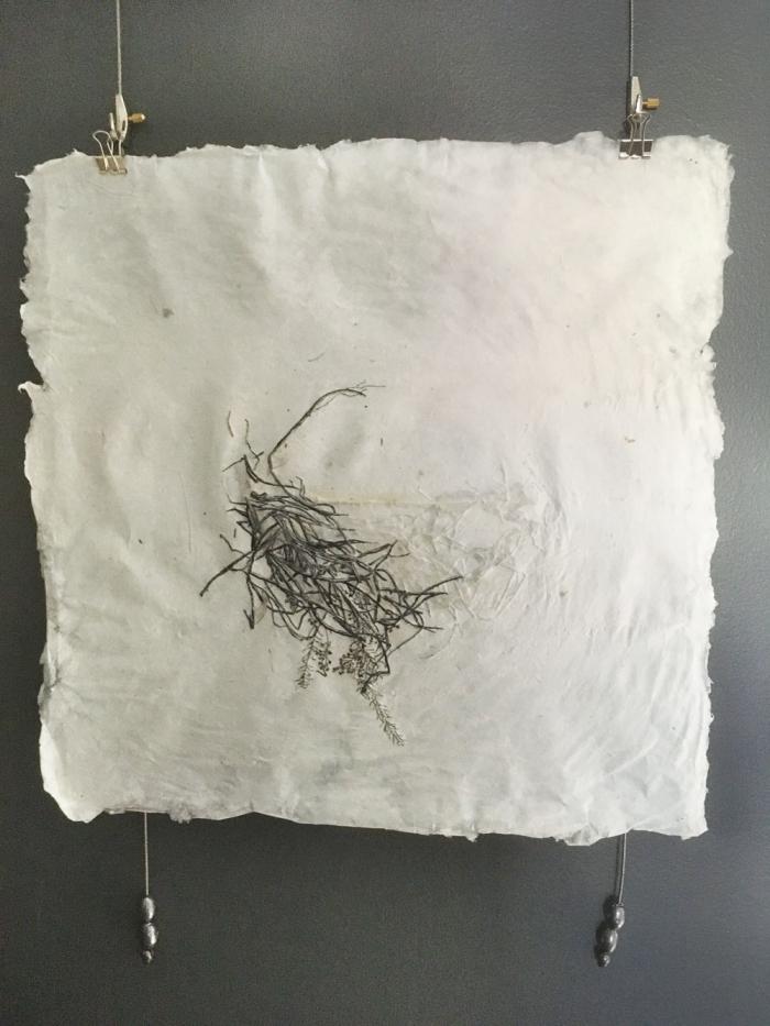 Sophie Voyez-Pelletier Nid