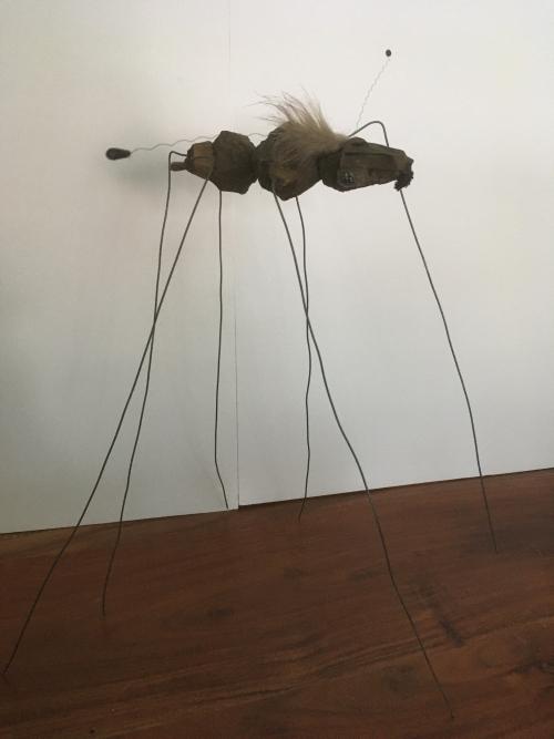 imago insecte Yvonne Barreau-Fein