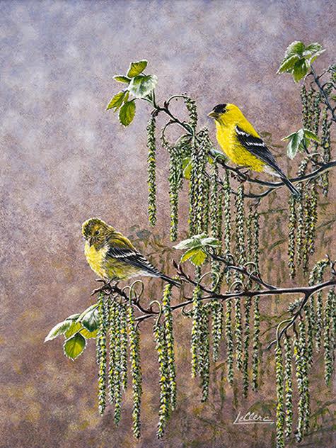 oiseaux jaunes